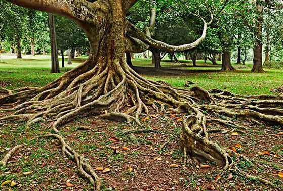 Ağaç Yapısı şema Ağacın Dış Yapısının özellikleri